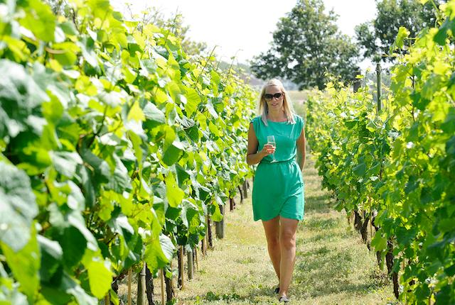 Rundvisning i vinmarken på Glenholm Vingård